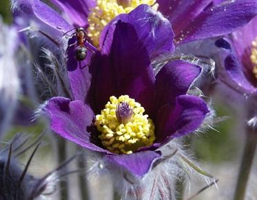 FlowerEsperyd